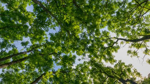 tree-banner.jpg